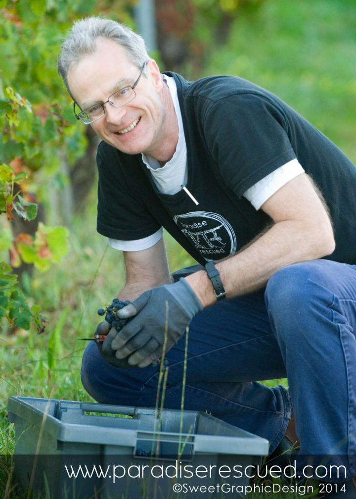 PR Boss Merlot Harvest