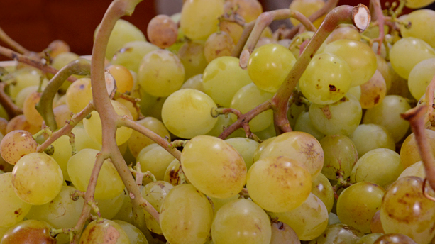 Moscatell Grapes