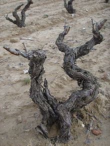 Rioja Alavesa Old Vines