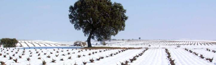 Rueda Vineyard