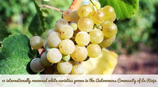 Maetierra muscat-wine-white-libalis