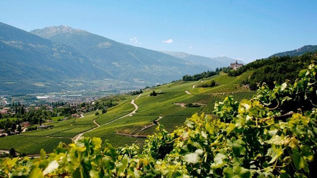vineyards-in-valais-switzerland