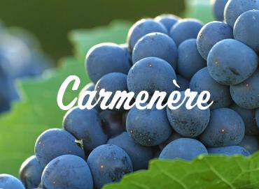 carmenere-www-vinhobr-com_-br_