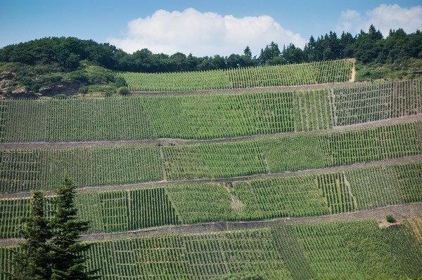 brauneberger-juffer-vineyard-mfr