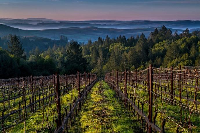 flanagan-wines-gallery