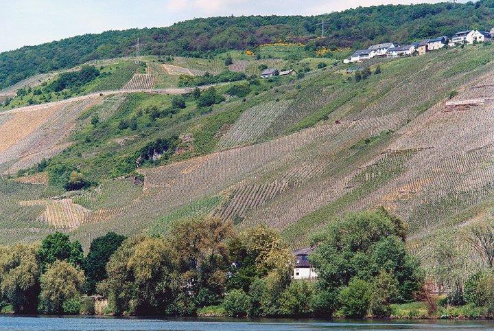 graacher-himmelreich-vineyard-mfr