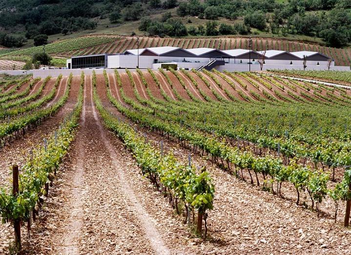 Cepa 21 Vines and Winery