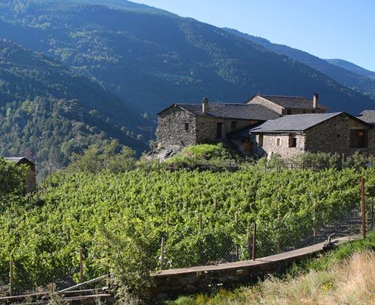 celler-mas-berenguer Andorra