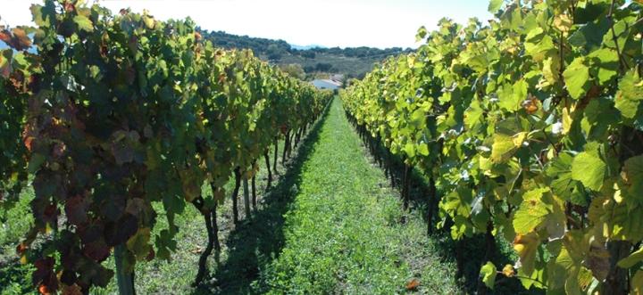 Vineyards F Schatz Ronda