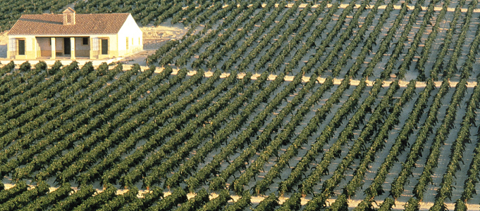 Andalucia Vines Wines from Spain