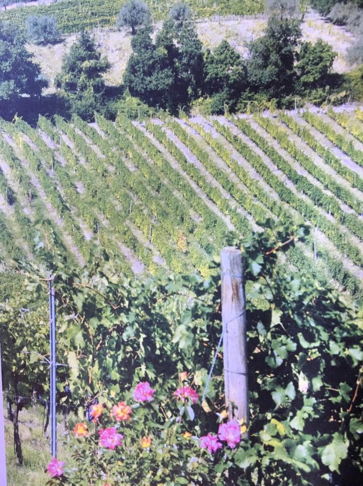 Braschi Vineyards