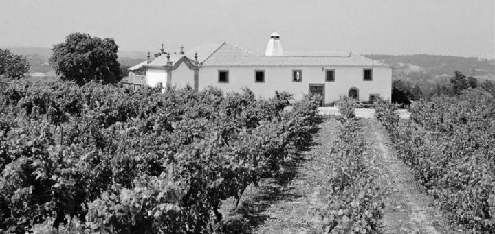 Quinta-da-Pelada Dao Vineyards