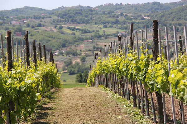 cantina-vino-montefalcione-avellino-donnachiara