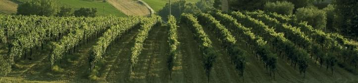 Brunori Vineyards