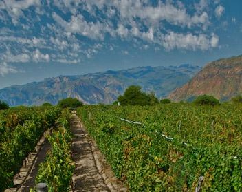 Vineyard San Isidro Amalaya