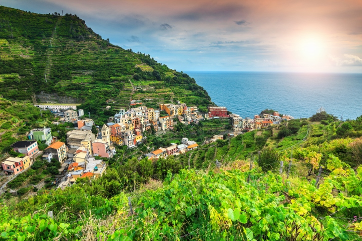 Spectacular vineyard and old town of Manarola, Italy, Europe