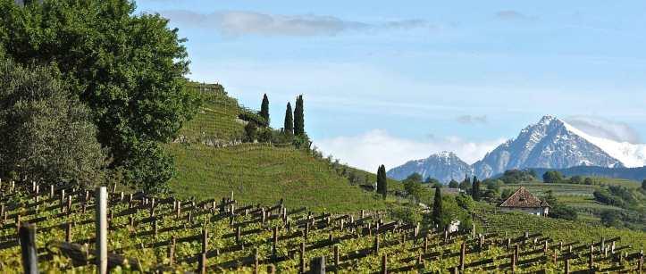 Background Alois Lageder Vineyards from website