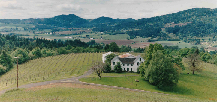 Laurel+Ridge+Vineyard+circa+1993 from GC website