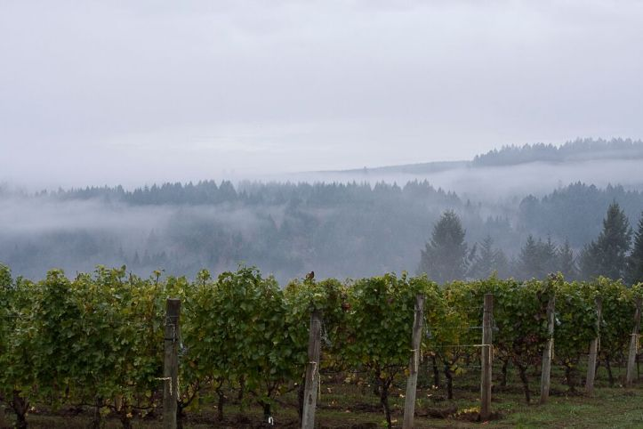 PG Cellars Estate Vineyard from website