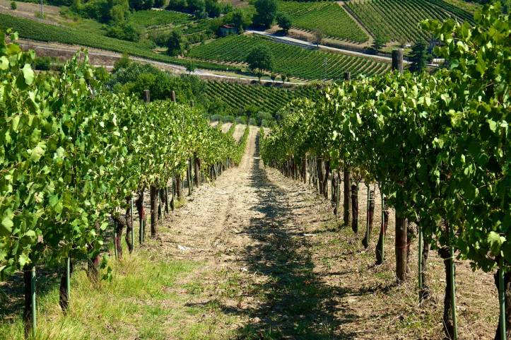 Montefusco Vineyard Mastroberardino Greco di Tufo