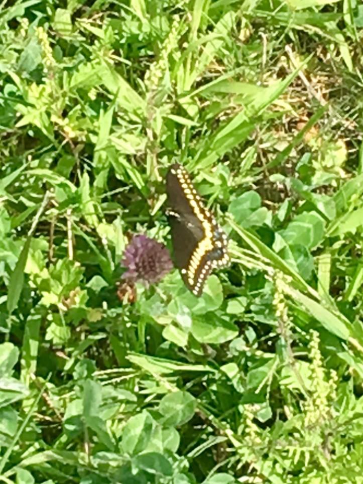 Butterfly Mine